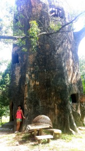 Tree House in Chiang Mai Zoo