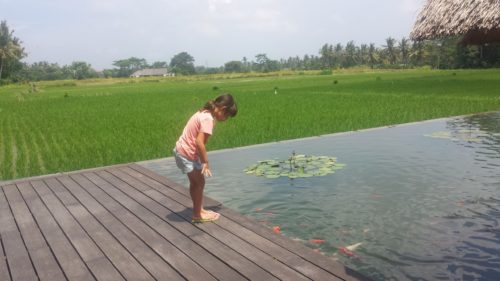 Rice Field Restaurant
