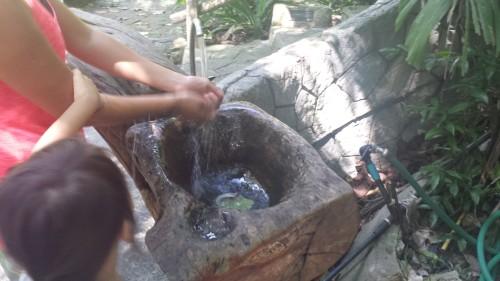Tree sink in Chiang Mai Zoo