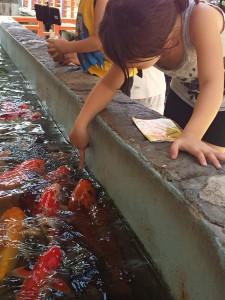 Touching Goldfish