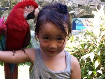 Parrot on Sholder