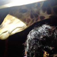 Chiang Mai Giraffe