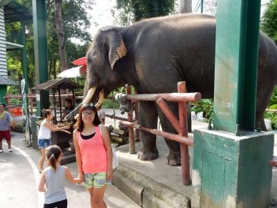 Chaing Mai Zoo Elephant